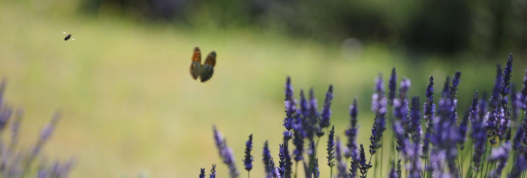 Papillon et mouche © Dominique Laugé