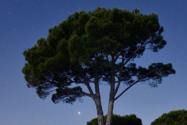 Jardin la nuit © Dominique Laugé
